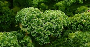 a bunch of kale: an example of bone building foods